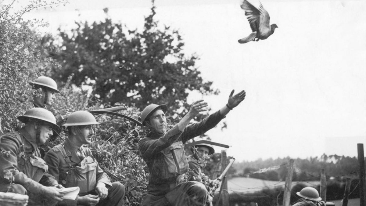 Messenger bird takes flight from soldiers hands